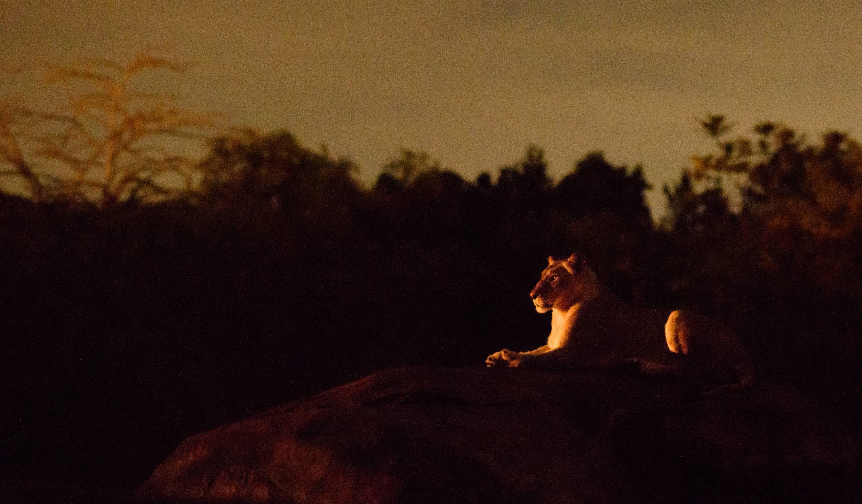 Kilimanjaro Safaris After Dark