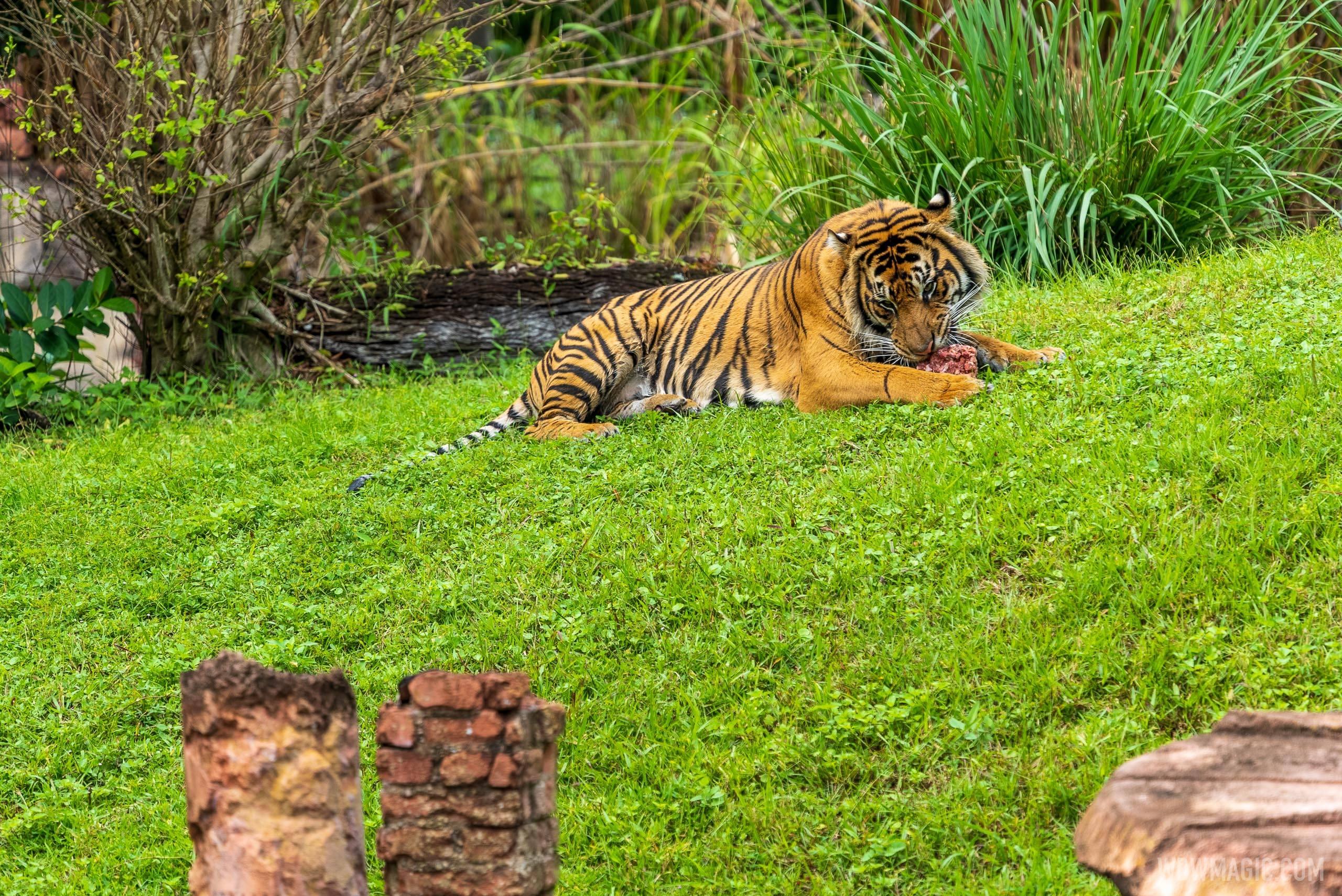 Maharajah Jungle Trek overview